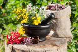 Целебные травы для лечения цистита