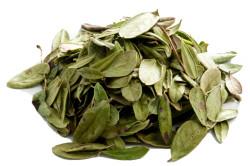 Листья брусники для лечения цистита