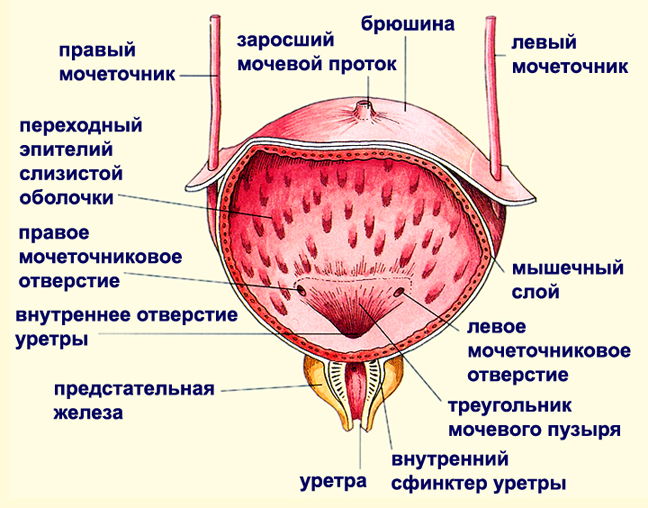 лечение от хламидий для мужчин