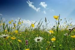 Лечение мочевого пузыря целебными травами