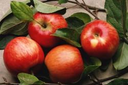 Польза яблок при цистите